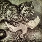 predatorprey_2013_01_cover